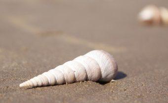 złote piaski Bułgaria